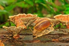 Желтые грибы и раковина Стоковое Изображение