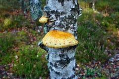 Желтые грибы Стоковые Фотографии RF
