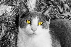 Желтые глаза Стоковая Фотография