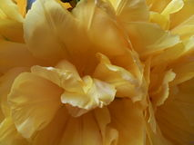Желтые лепестки Стоковая Фотография