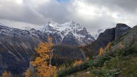 Желтые деревья лиственницы приближают к вош озера, Альберте, Канаде стоковая фотография