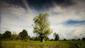 Желтые деревья и голубое небо. Стоковые Фото