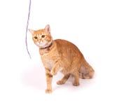 Желтые игры кота стоковые изображения rf