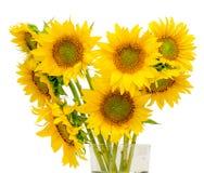 Желтые изолированные солнцецветы, конец вверх, вырез стоковые изображения rf