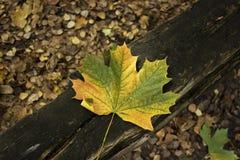 Желтые листья осени лежа на стенде Время осени Стоковые Изображения RF