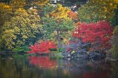 Желтые листья осени, деревья цвета падения Стоковое Изображение