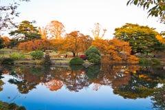 Желтые листья осени, деревья цвета падения Стоковое фото RF