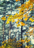 Желтые листья осени на дереве стоковая фотография
