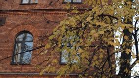 Желтые листья осени против кирпичного здания сток-видео