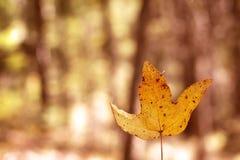 Желтые листья осени стоковые изображения rf