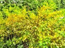 Желтые листья падения на дереве стоковая фотография
