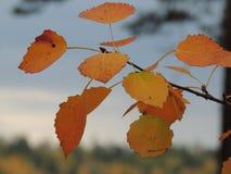 Желтые листья предыдущей осени красивы Стоковые Изображения