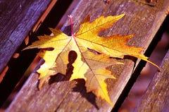 Желтые листья Стоковые Изображения