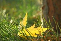 Желтые листья стоковая фотография rf
