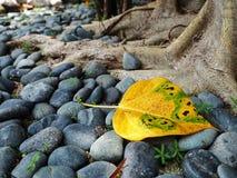 Желтые листья Стоковая Фотография