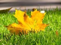 Желтые листья Стоковые Изображения RF