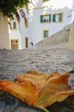Желтые листья Стоковое Фото