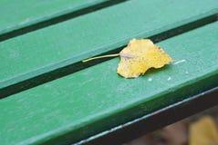 Желтые листья Стоковое фото RF
