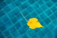 Желтые лист в бассейне, голубая предпосылка minimalism Осень красит концепцию Стоковые Фото