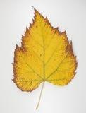 Желтые лист в падении Стоковое Изображение
