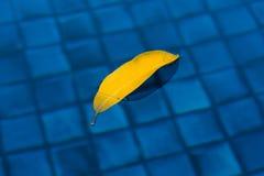 Желтые лист над водой Стоковая Фотография RF