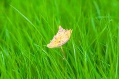 Желтые лист на зеленой траве Стоковые Изображения