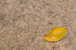 Желтые лист на поле гравия абстрактная предпосылка Стоковые Изображения RF