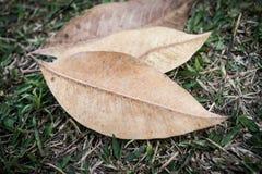 Желтые лист на поле Стоковые Изображения