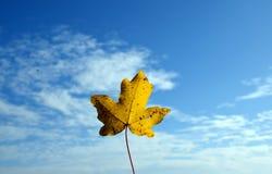 Желтые лист с пасмурным голубым небом Стоковая Фотография