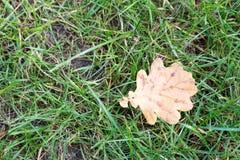 Желтые лист упали на зеленую траву осень раньше Стоковая Фотография RF