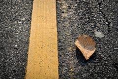 Желтые лист Стоковые Фотографии RF