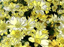 Желтые и белые маргаритки Стоковые Изображения RF