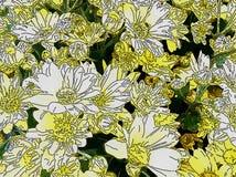 Желтые и белые маргаритки Стоковые Фото