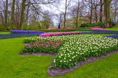 Желтые и белые daffodils в Keukenhof паркуют, Lisse, Голландия, Нидерланды Стоковое Изображение RF