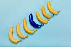 Желтые и голубые бананы изолированные на голубых, зрелых бананах Стоковая Фотография RF