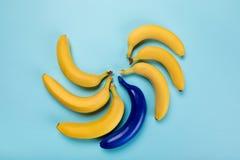 Желтые и голубые бананы изолированные на голубых, зрелых бананах Стоковое фото RF