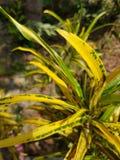 Желтые и зеленые лист Стоковые Изображения RF