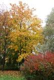 Желтые и красные деревья в осени стоковая фотография rf