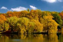 Желтые и красные листья на деревьях в осени, октябре Стоковое фото RF