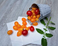 Желтые и красные томаты Стоковые Фотографии RF