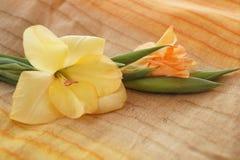 Желтые и оранжевые гладиолусы Стоковое фото RF