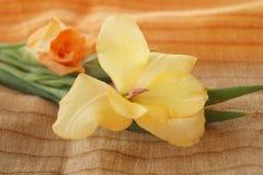 Желтые и оранжевые гладиолусы Стоковые Фото