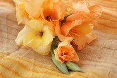Желтые и оранжевые гладиолусы Стоковое Изображение