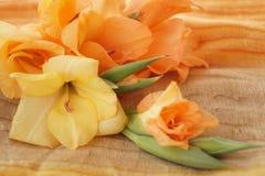 Желтые и оранжевые гладиолусы Стоковые Фотографии RF