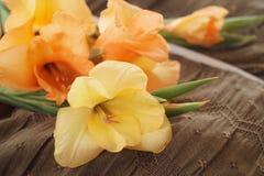 Желтые и оранжевые гладиолусы Стоковые Изображения