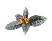 Желтые и оранжевые цветки с лист Стоковое Изображение