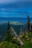 Желтые канола поля в долине Стоковое Изображение RF