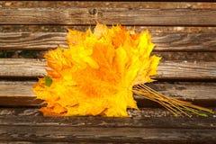 Желтые кленовые листы, парк осени, золотое время осени, желтый цвет Стоковая Фотография RF
