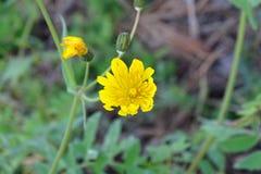 Желтые малые красивые цветки в лесе Стоковые Изображения RF