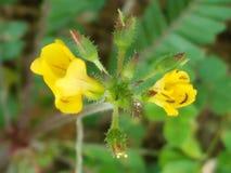Желтые обои предпосылки цветка цвета Стоковое фото RF